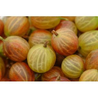 Stachelbeeren 250g