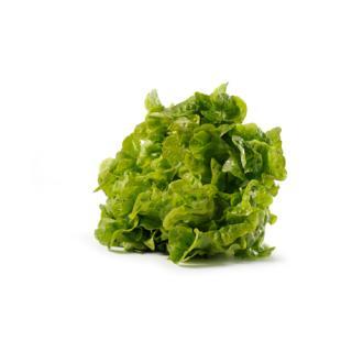 Salat, Eichblatt grün