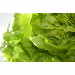 Salat, Kopf-, grün