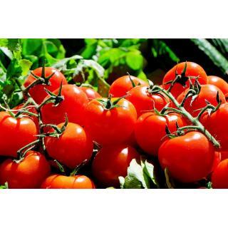 Tomaten, Cocktail-