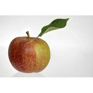 Äpfel, Boskoop