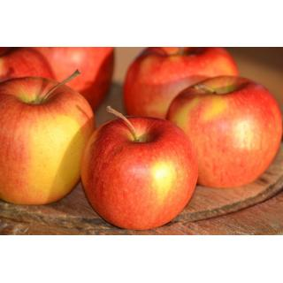Äpfel, Pinova