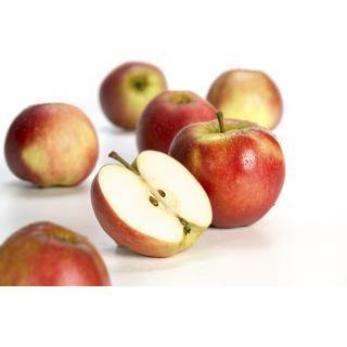 Äpfel, Elstar